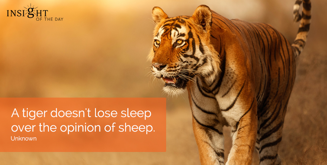 motivational quote: A tiger doesn't lose sleep over the opinion of sheep. Unknown